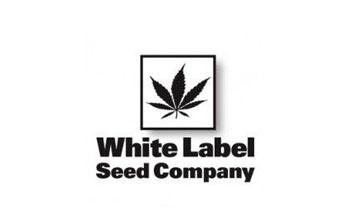 Sensi White Label