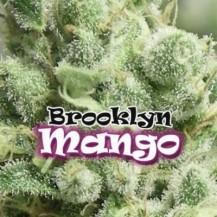 brooklyn mango dr underground 4un