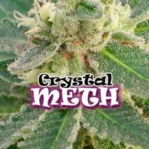 crystal m.e.h.t. dr underground 4un