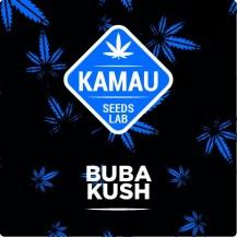 Buba Kush