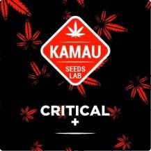 Critical Kamau