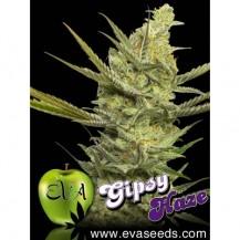 gipsy haze eva seeds 6un