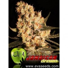 jamaican dream eva seeds 6un
