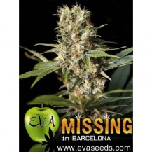 missing eva seeds 6un
