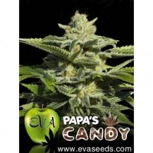 papa's candy eva seeds 6un