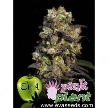 pink plant eva seeds 6un